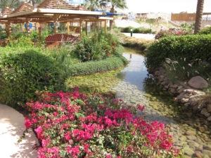 oaza de verdeata in Egipt